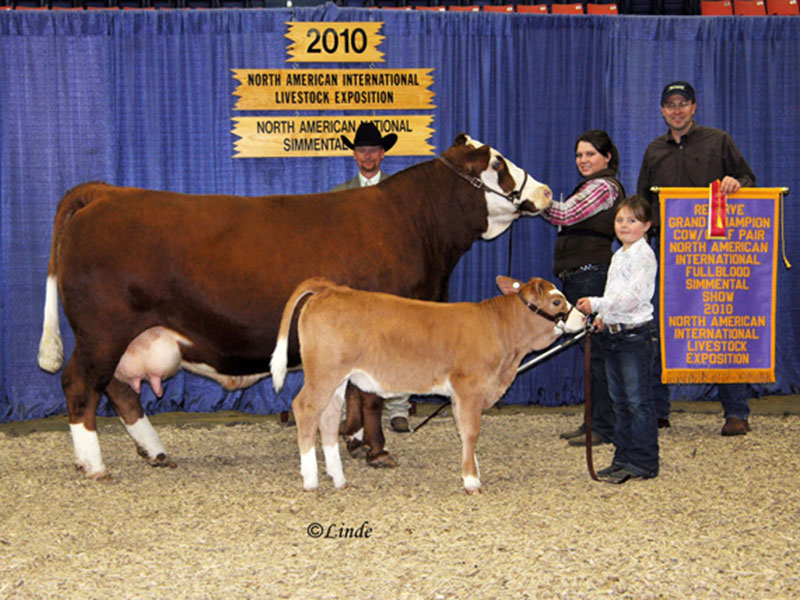 North American International Livestock Exposition 2010 Reserve Champion Cow/Calf Freedom Run Farm.
